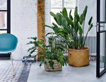Fleur je woning op met deze kamerplanten