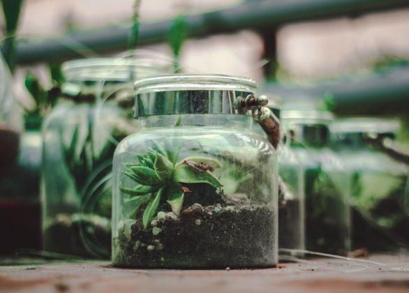 Mini ecosysteem in een fles