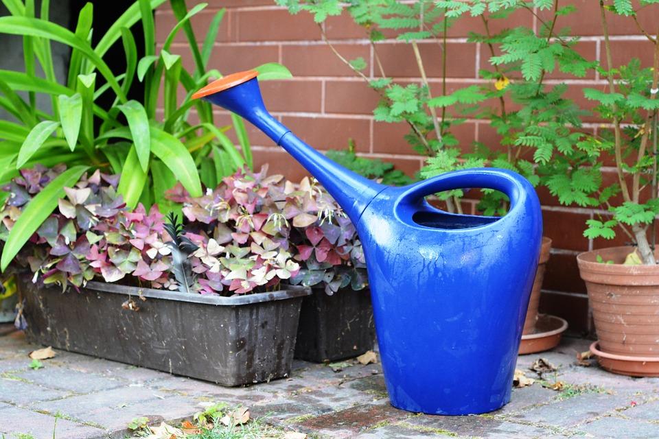 hoelang kunnen planten zonder water