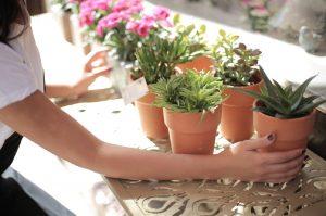 3 tips voor het samenstellen van herfstpotten