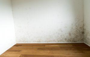 Schimmel in huis voorkomen: 5 tips