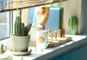 Een cactus verzorgen: zo doe je dat!