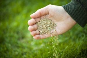Alles over het zaaien van gras